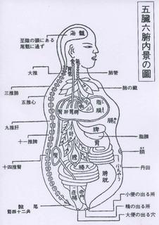 五臓六府(小).jpg